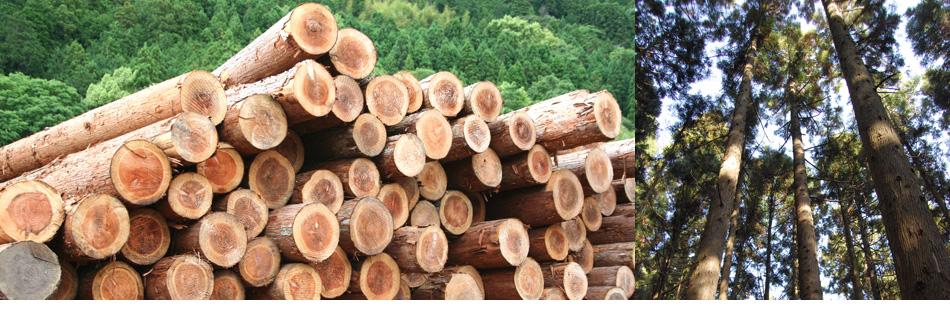 徳島から木材の情報を発信しています